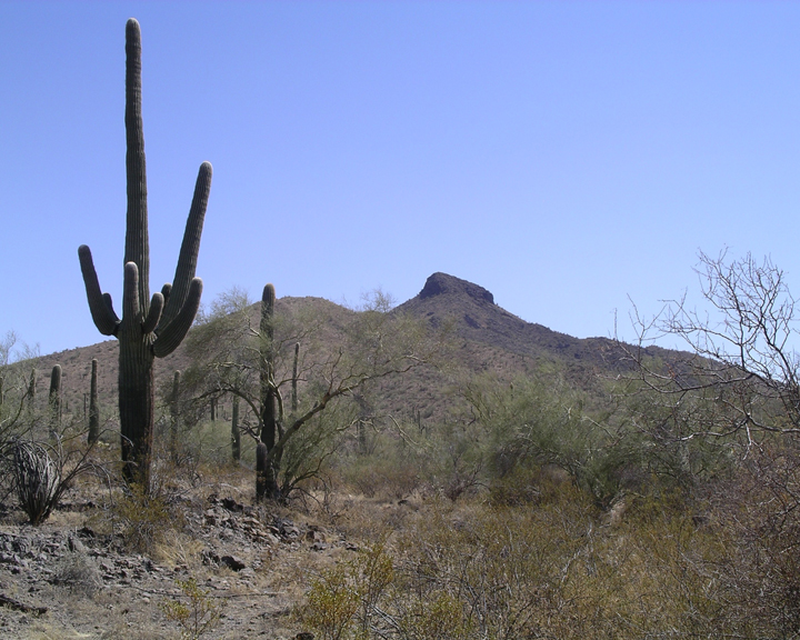 Three cactuses stand sentinel over a wild looking desert, while a rock outcropping stands in the distance.